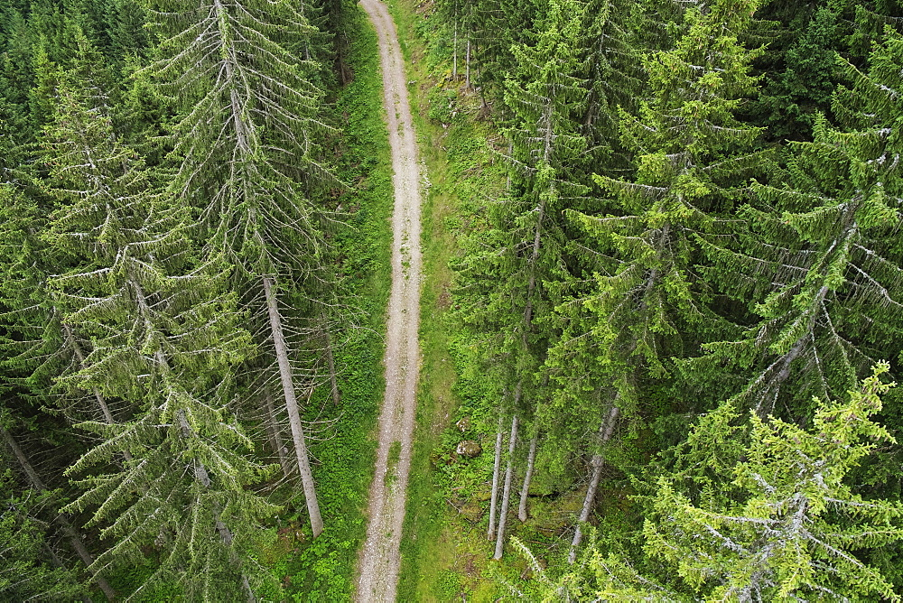 High angle view of dirt road amidst evergreen trees