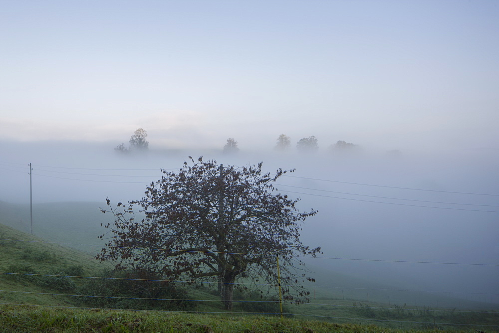 Scenic view of field in foggy weather against sky