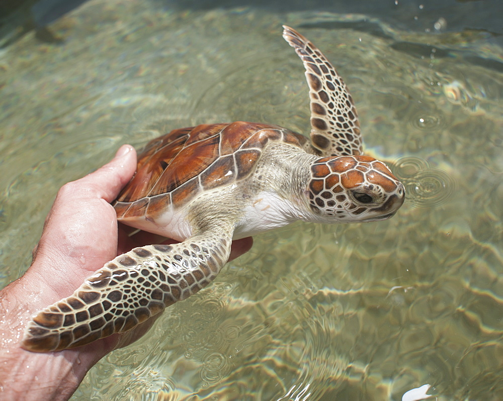 Cropped image of hand holding turtle over sea