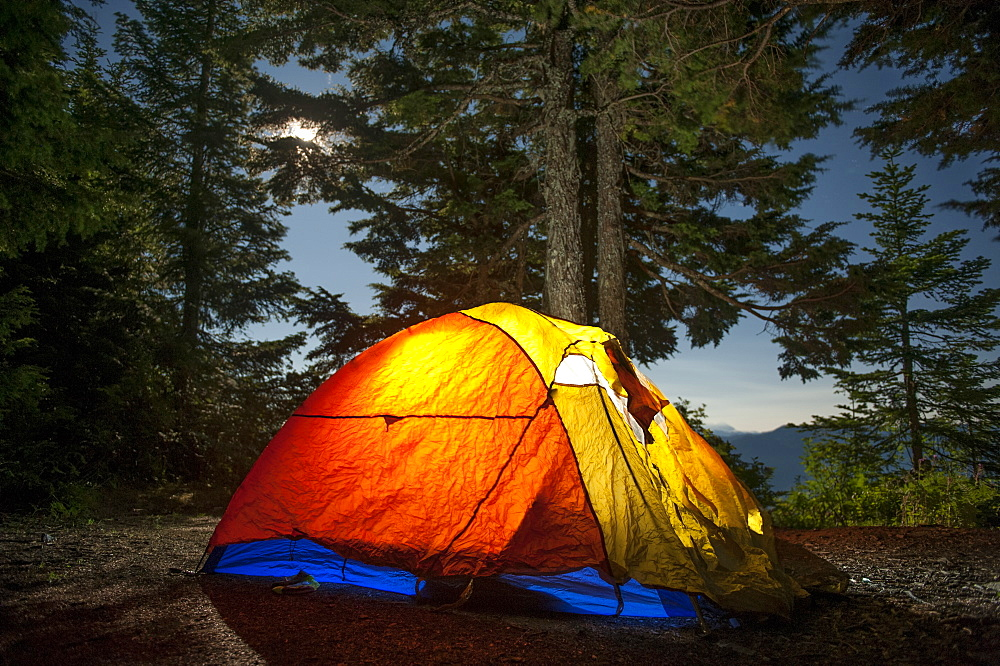 Illuminated camping tent against trees in forest