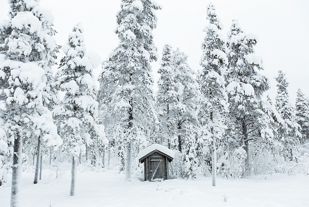 House surrounded snow covered trees