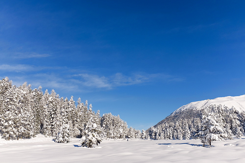 Snow covered trees on mountain against blue sky on sunny day