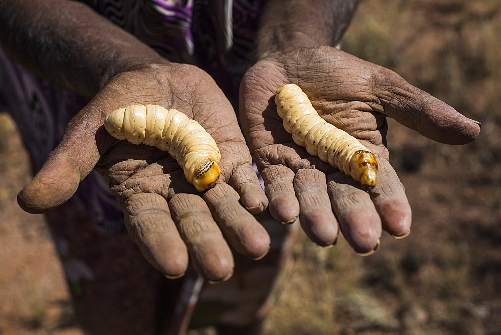 Midsection of man holding witchetty grubs in palms