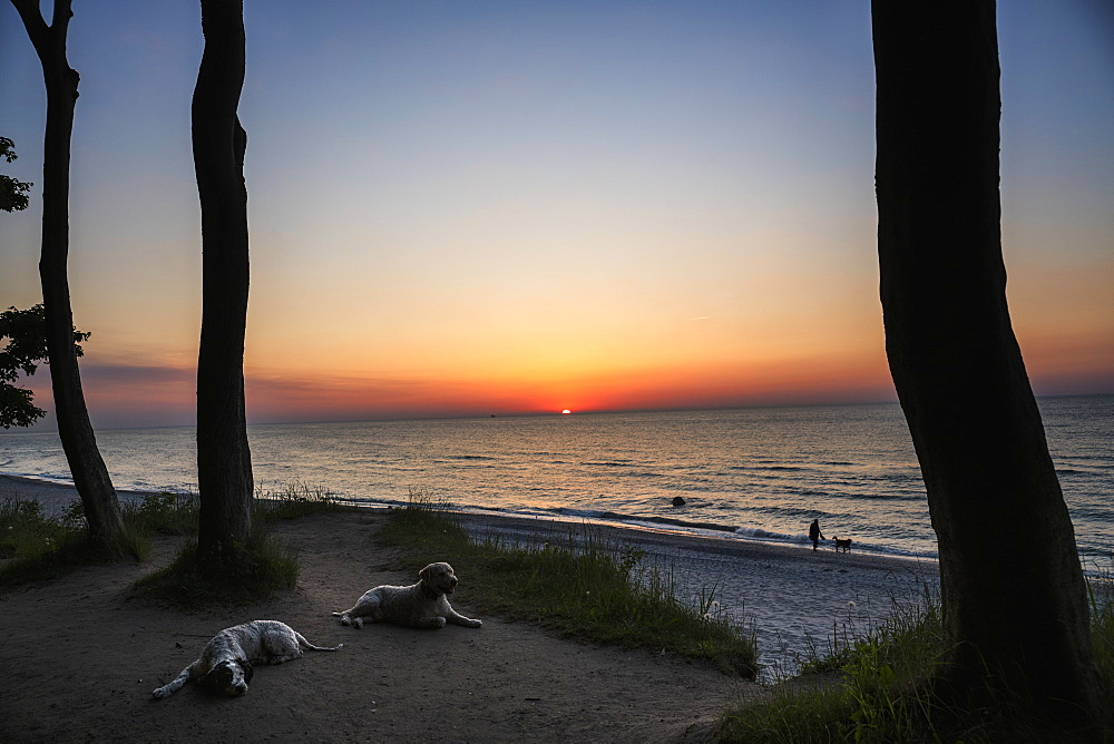 Dogs resting on sunset beach, Wiendorf, Mecklenburg-Vorpommern, Germany