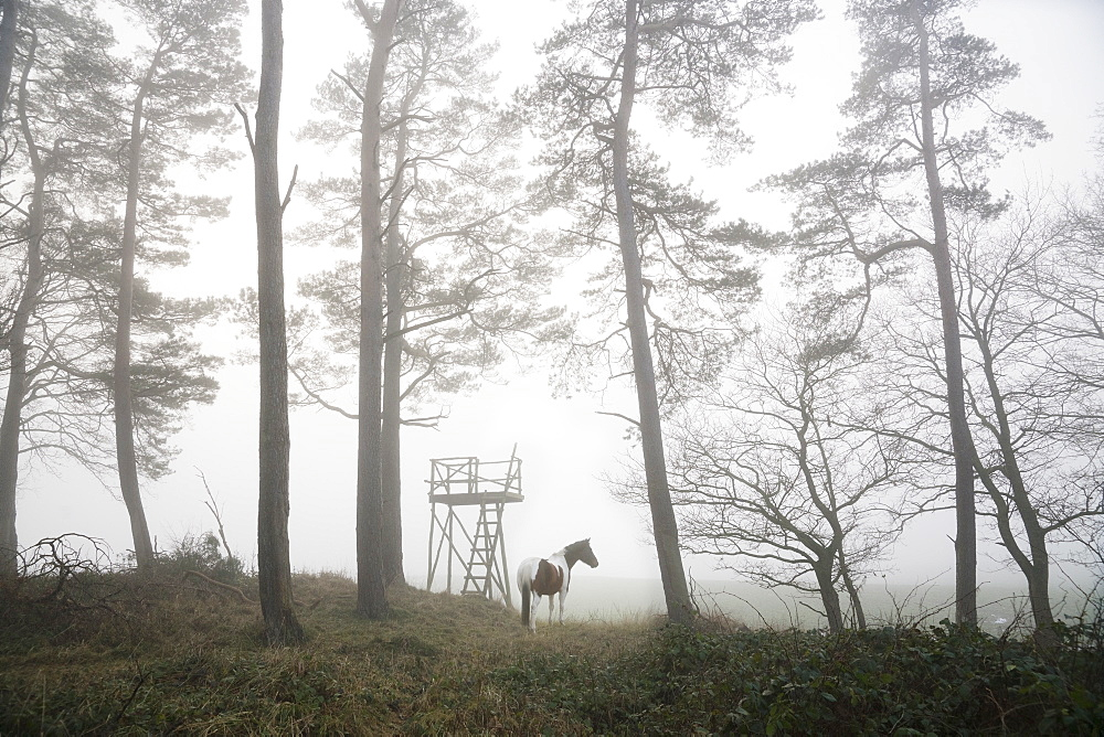Horse standing in foggy forest