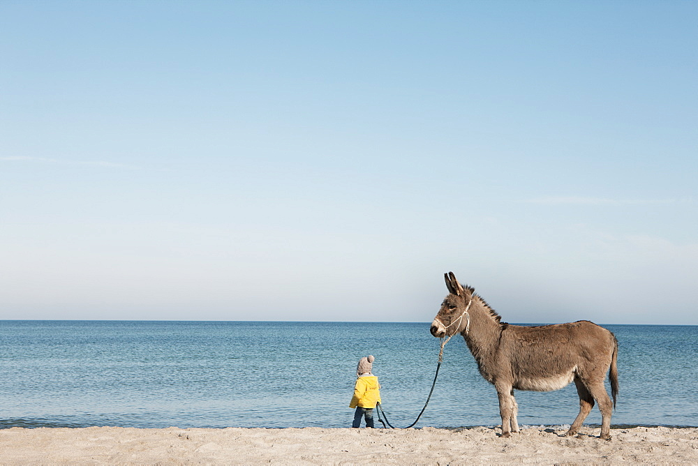 Girl leading donkey on beach, Wiendorf, Mecklenburg-Vorpommern, Germany