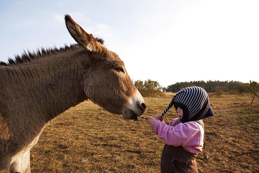 Donkey pulling hat on cute girl - 1177-1979
