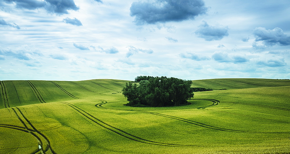 Scenic view green farmland and stand of trees, Brandenburg, Germany