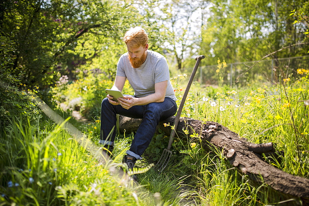 Man with beard using digital tablet in sunny garden
