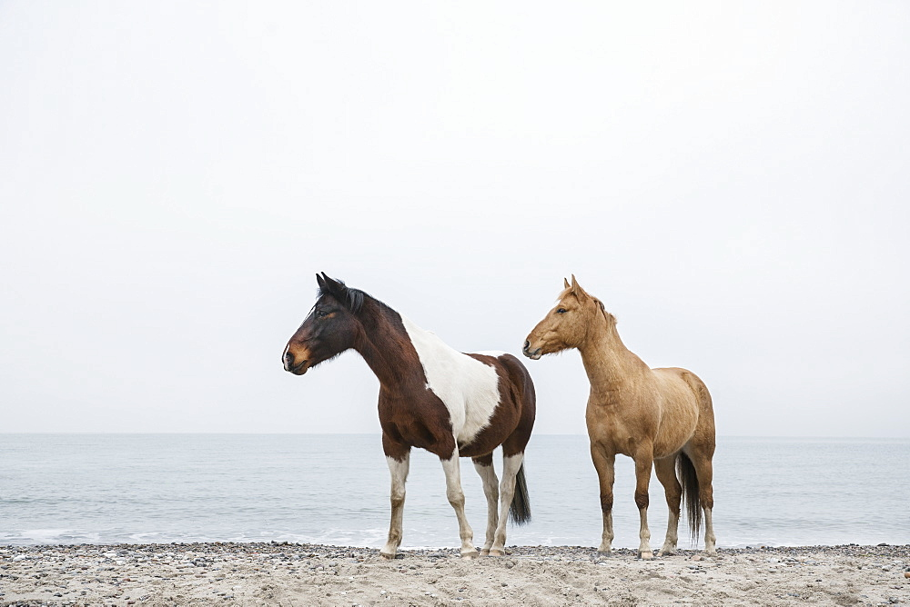 Horses on sandy ocean beach