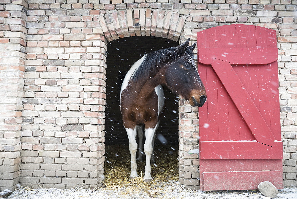 Snow falling over horse standing in barn doorway