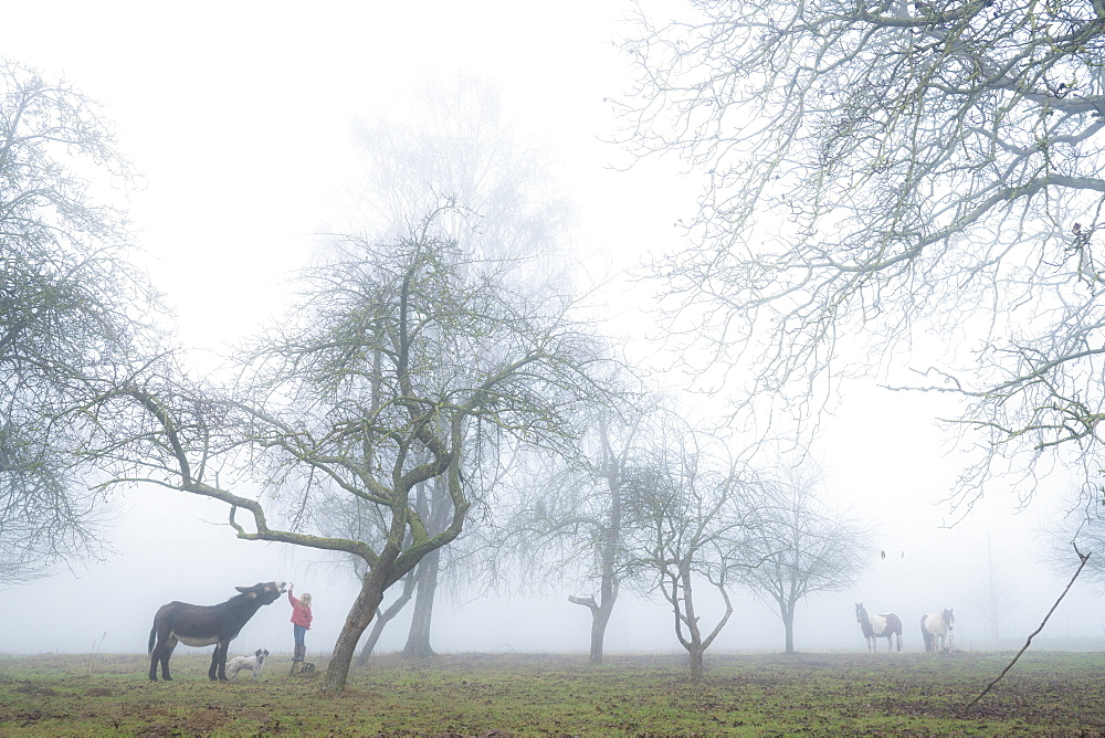 Girl with dog and donkey on foggy rural farm