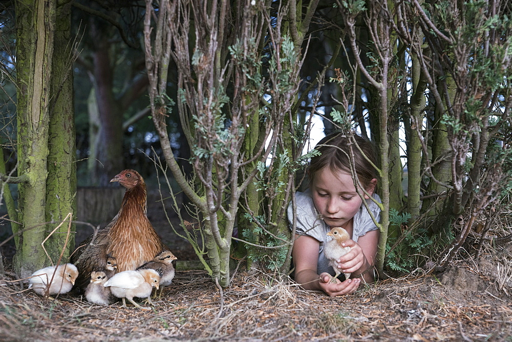 Girl holding baby chick under tree on farm