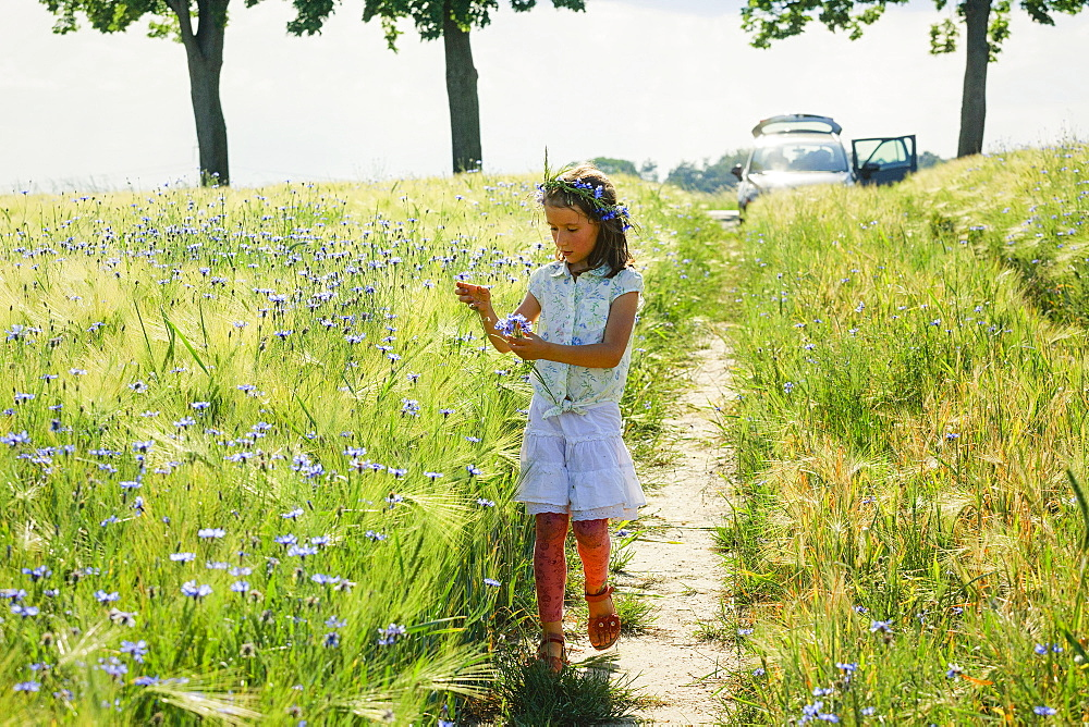 Girl picking purple wildflowers in sunny, idyllic rural field