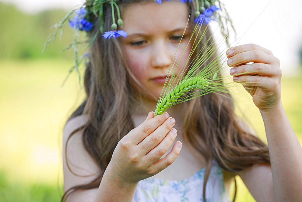 Curious girl holding green wheat stalk