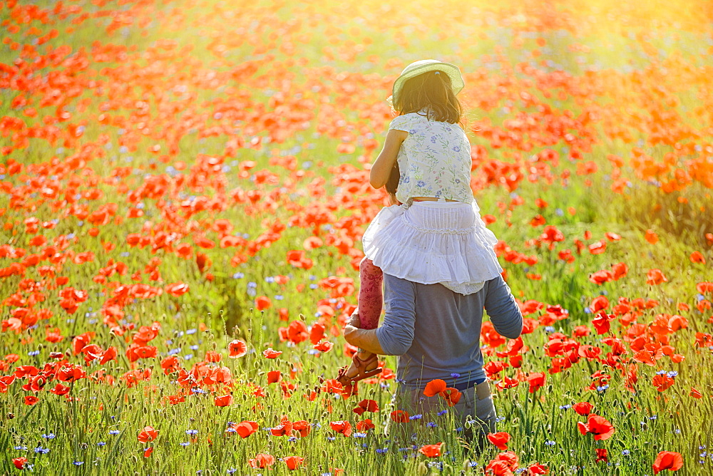 Father carrying daughter on shoulders in sunny, idyllic rural field with red poppy flowers