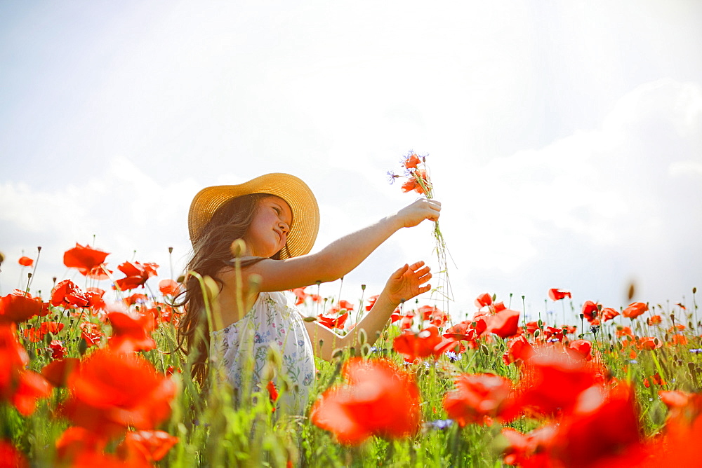 Girl picking red poppy flowers in sunny, idyllic rural field