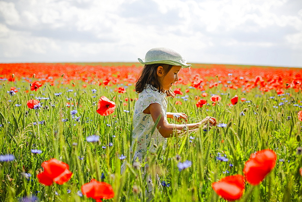 Curious girl in sunny, idyllic rural red poppy field