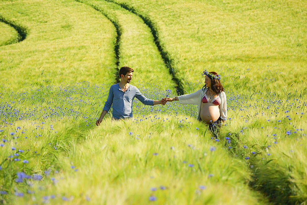 Affectionate pregnant couple holding hands, walking in sunny, idyllic rural green field