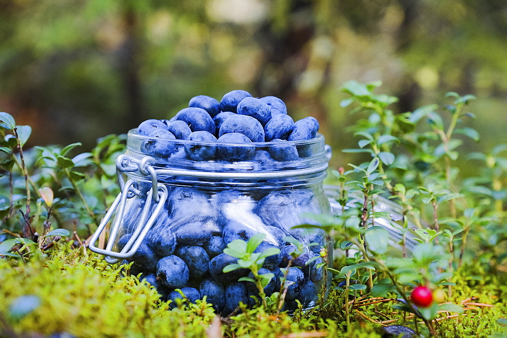 Fresh, ripe blueberries