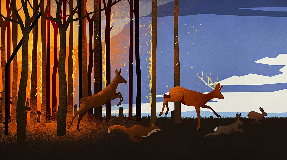 Forest animals running from forest fire at night