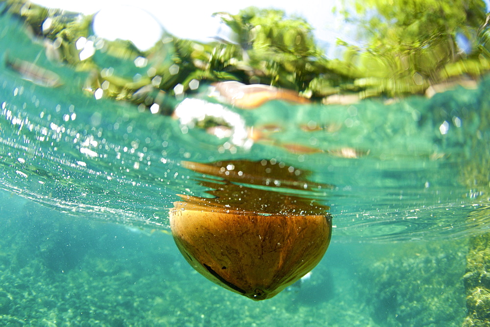 Coconut floating in tropical ocean, Puerto Vallarta, Jalisco, Mexico