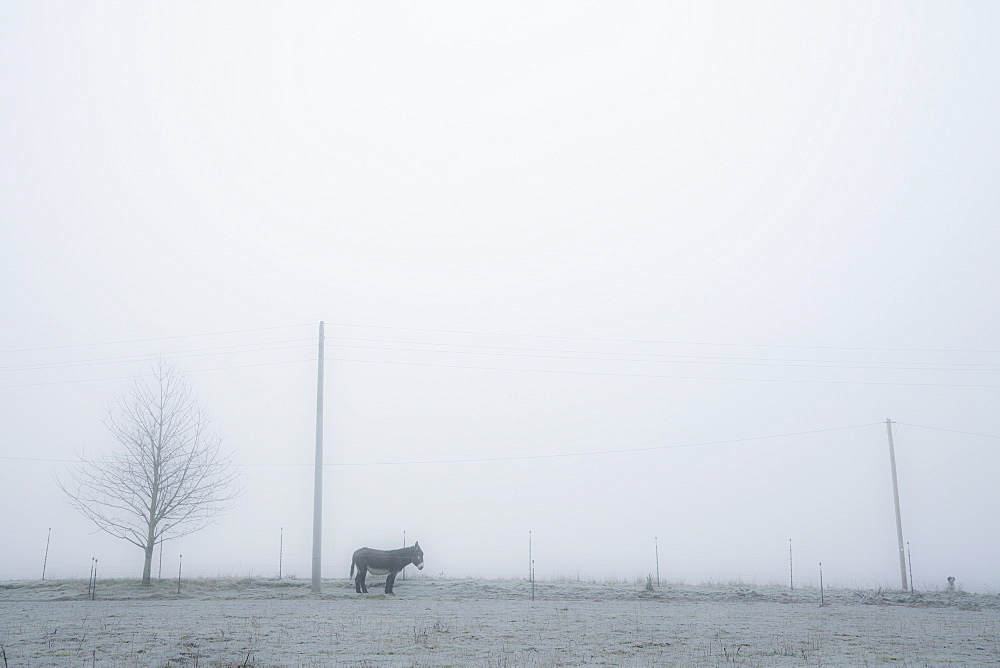 Donkey in serene, foggy pasture, Wiendorf, Mecklenburg, Germany
