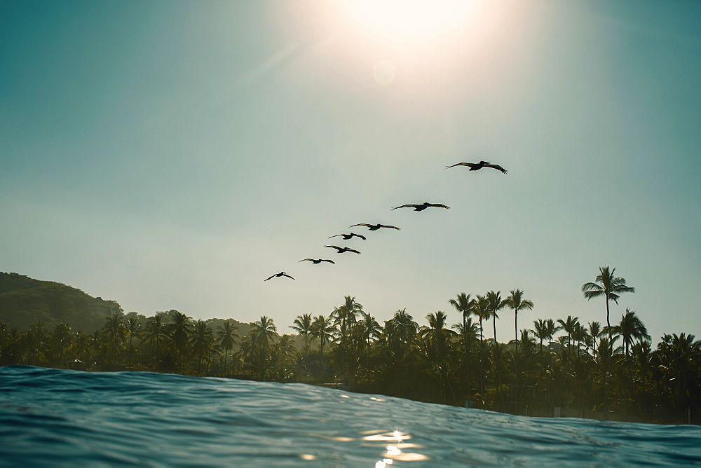 Silhouette birds flying in row over sunny, idyllic tropical ocean, Sayulita, Nayarit, Mexico