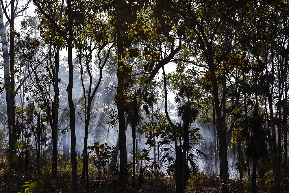 Preventative patch burning fire smoke in tropical forest, Kakadu National Park, Australia
