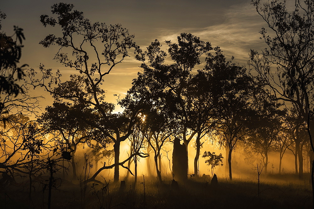 Ethereal sunrise behind silhouetted trees, Kakadu National Park, Australia