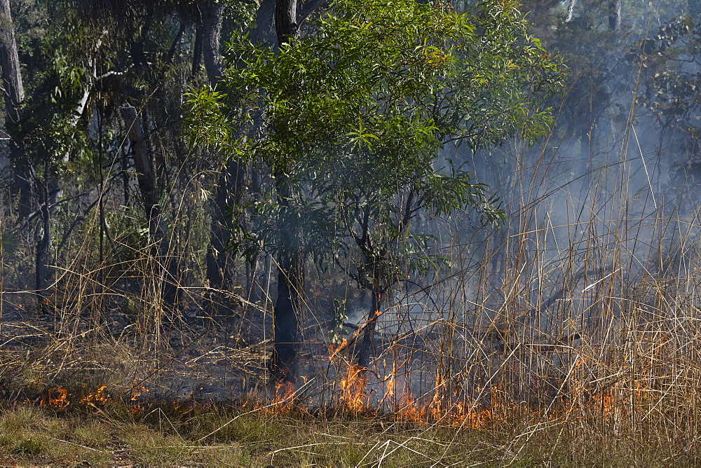 Preventative patch burning fire in woods, Kakadu National Park, Australia
