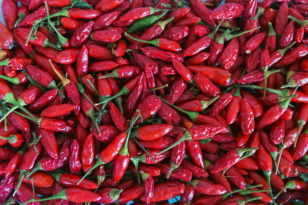 Full frame abundance of vibrant, red, organic chili peppers
