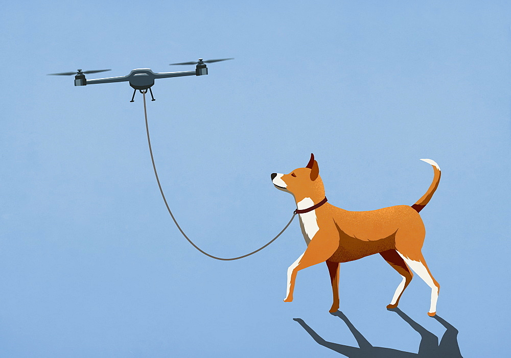 Drone taking dog for walk on leash