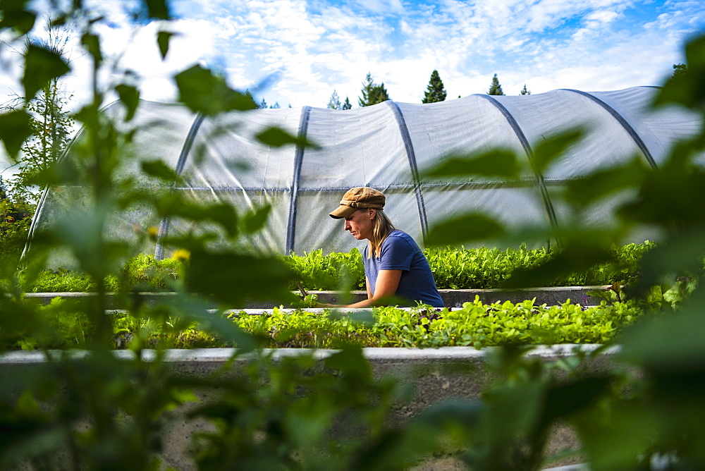 Female farmer tending to vegetable plants outside greenhouse