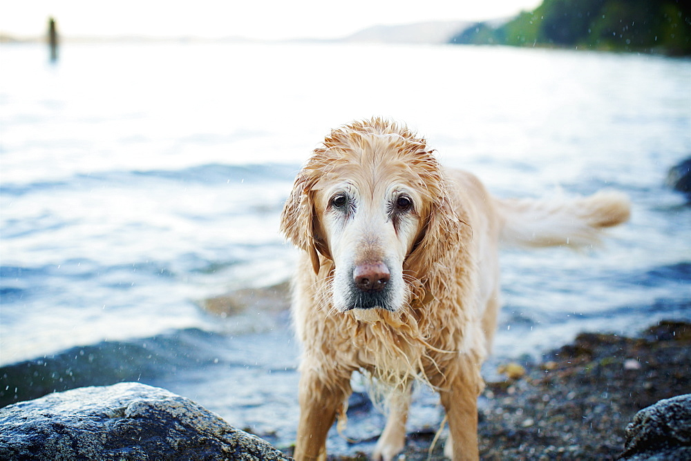 Portrait wet dog on beach