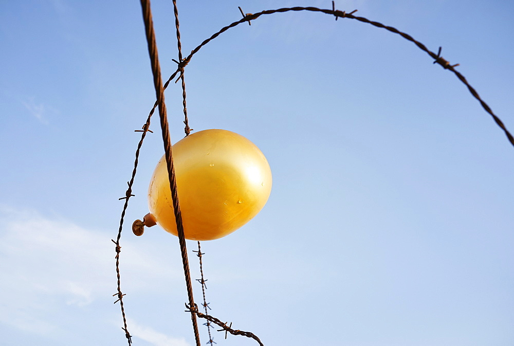 Deflating golden balloon caught in barbed wire