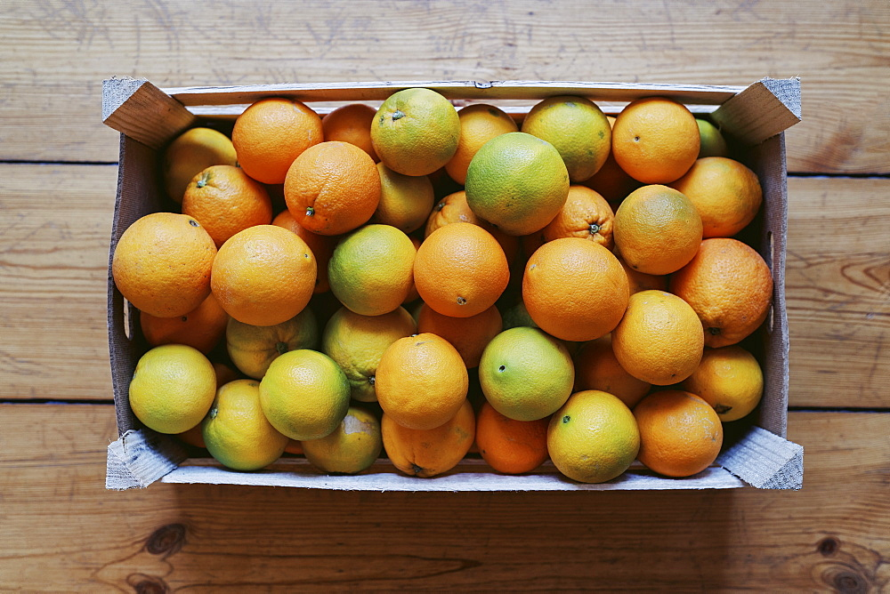 Crate of fresh harvested citrus fruit - 1177-4175