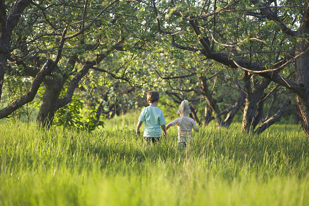 A brother and sister walking hand in hand through a meadow