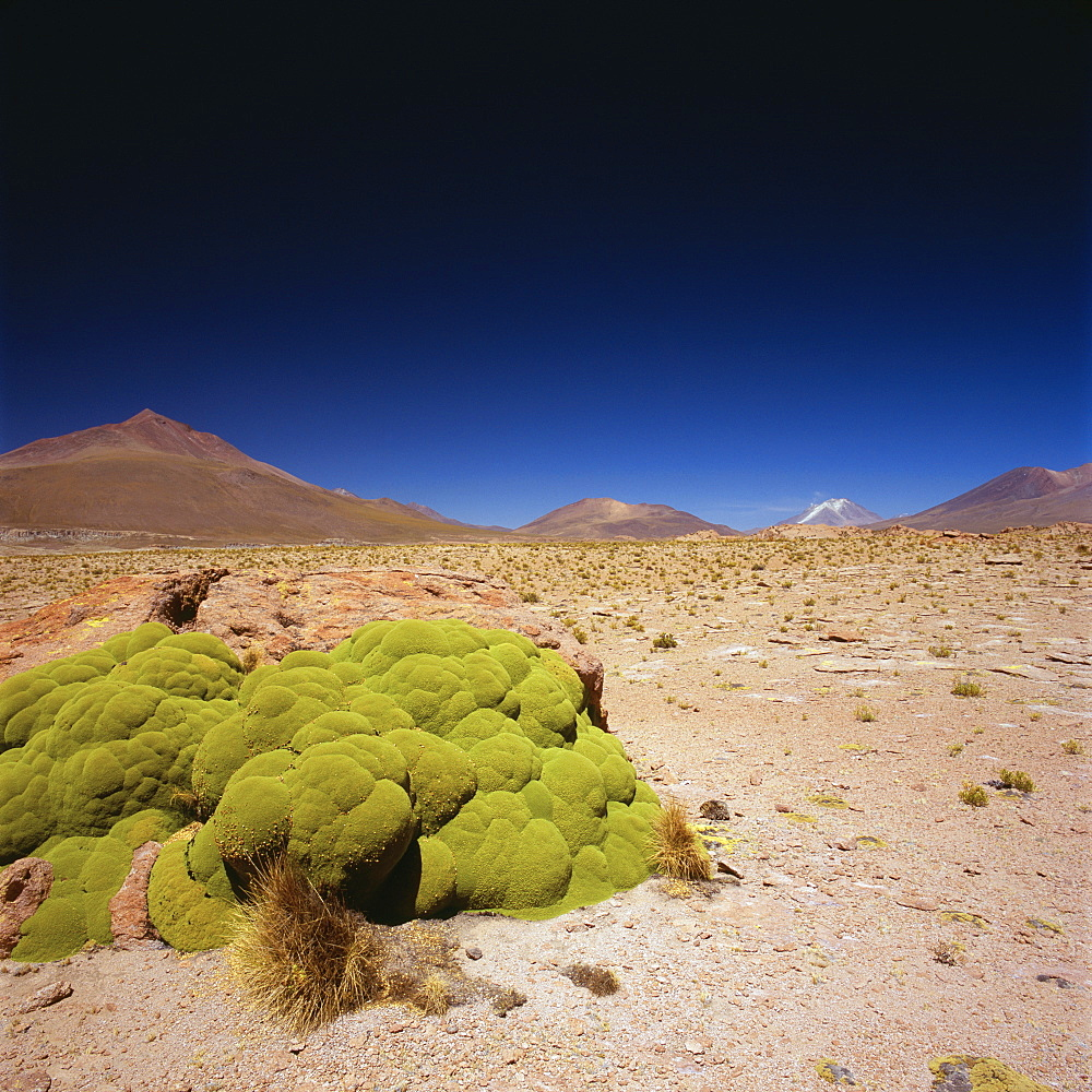 Idyllic shot of desert landscape against clear blue sky on sunny day, Altiplano, Bolivia - 1177-1839