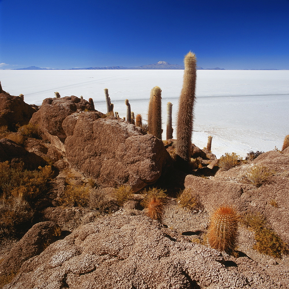 Cactus on rock formation in desert against blue sky, Salar de Uyuni, Bolivia - 1177-1835