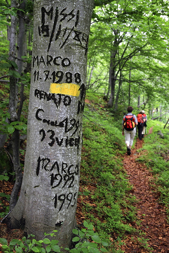 Names and dates carved into a tree on a hiking trail, val sangone, italy