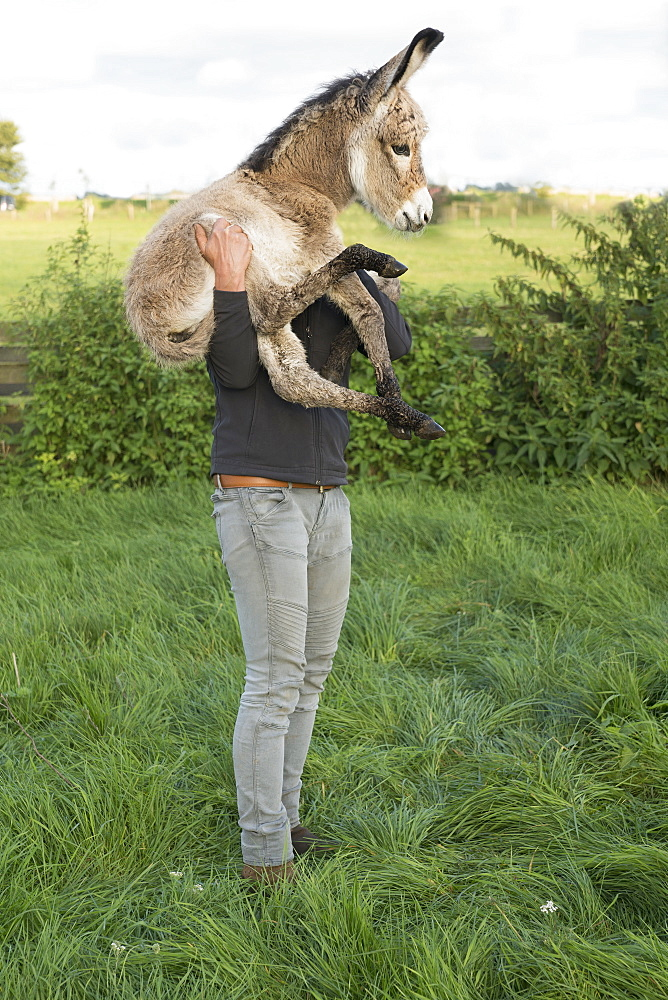 Man holding goat on farm