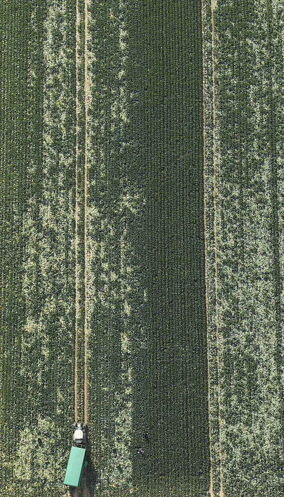 Aerial view tractor in green agricultural crop, Hohenheim, Baden-Wuerttemberg, Germany