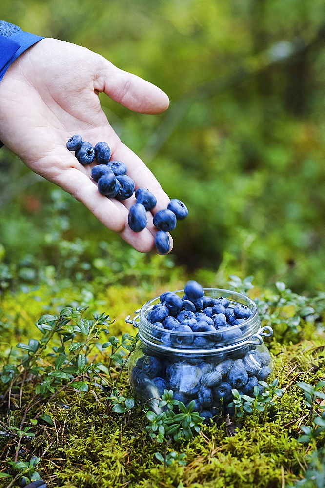 Hand holding fresh, ripe blueberries