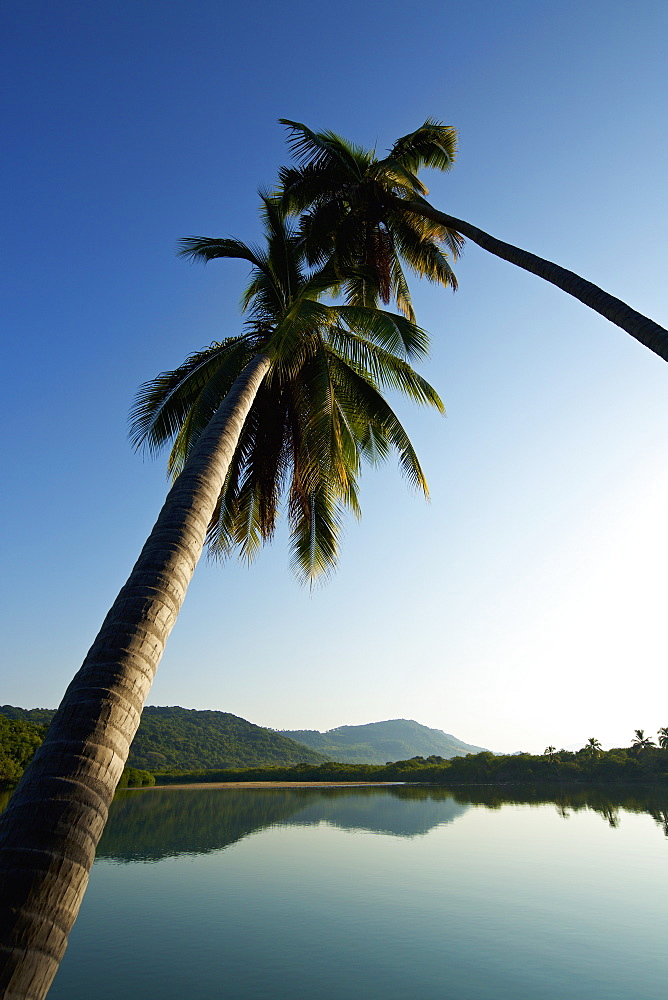 Palm trees over tranquil, idyllic sunny lake, Platinitos, Nayarit, Mexico