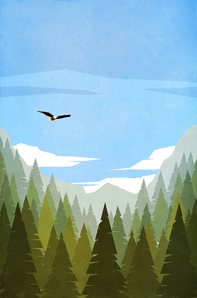 Bald eagle flying over treetops