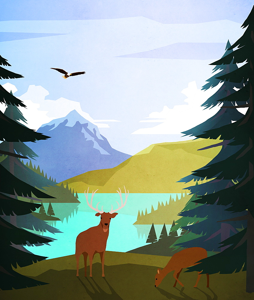 Bald eagle and deer at idyllic, remote lakeside
