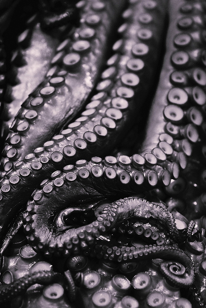 Close up octopus tentacles