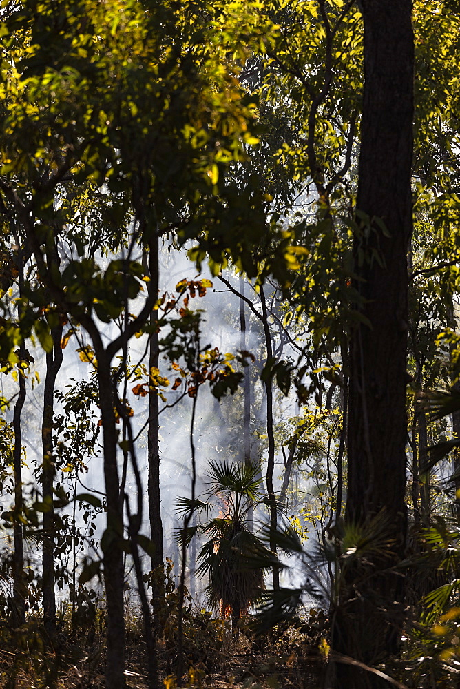 Preventative patch burning fire in tropical forest, Kakadu National Park, Australia