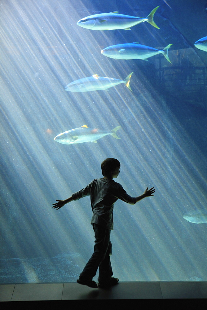 Boy watching fish in aquarium